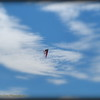 2016-11-12_PB120002_Kite Fest    Treasure Island,Fl