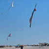 2016-11-12_PB120120_Kite Fest    Treasure Island,Fl