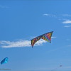 2016-11-12_PB120124_Kite Fest    Treasure Island,Fl