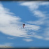 2016-11-12_PB120003_Kite Fest    Treasure Island,Fl