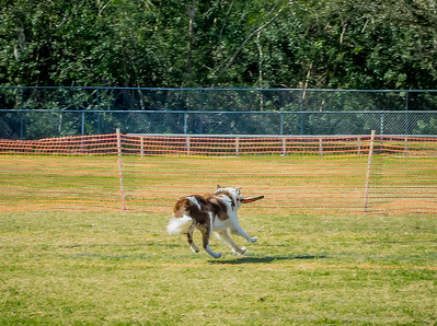 2019-01-19_40x150,pmode, Dogs in Paradise_P1190413