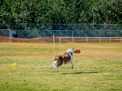 2019-01-19_40x150,pmode, Dogs in Paradise_P1190412