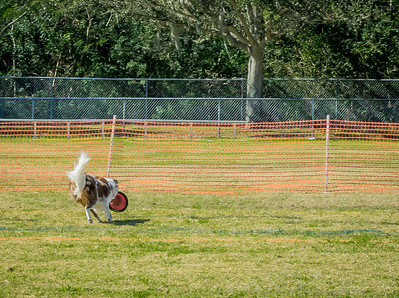 2019-01-19_40x150,pmode, Dogs in Paradise_P1190417