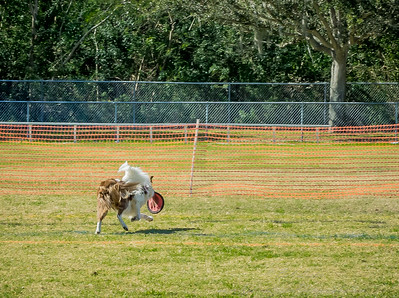 2019-01-19_40x150,pmode, Dogs in Paradise_P1190415