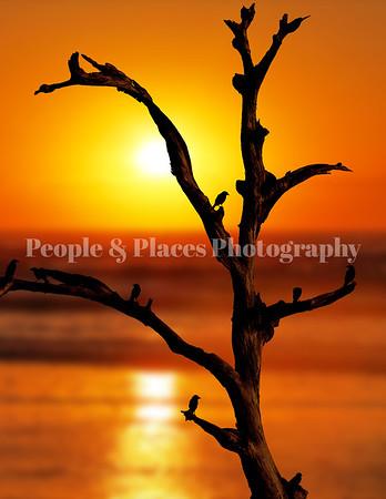 BirdsinOldeTree sunset-2