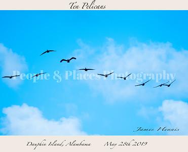 10Pelicans-1