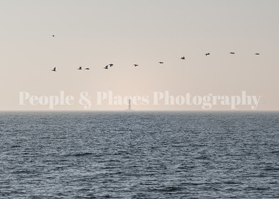 11Pelicans+LIghthouse