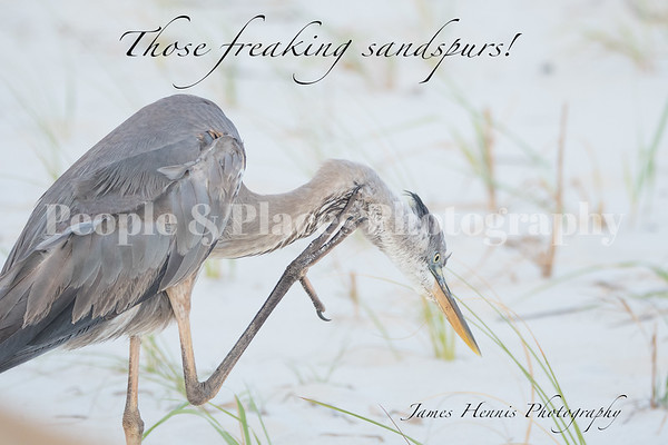 Heron-Scratch1