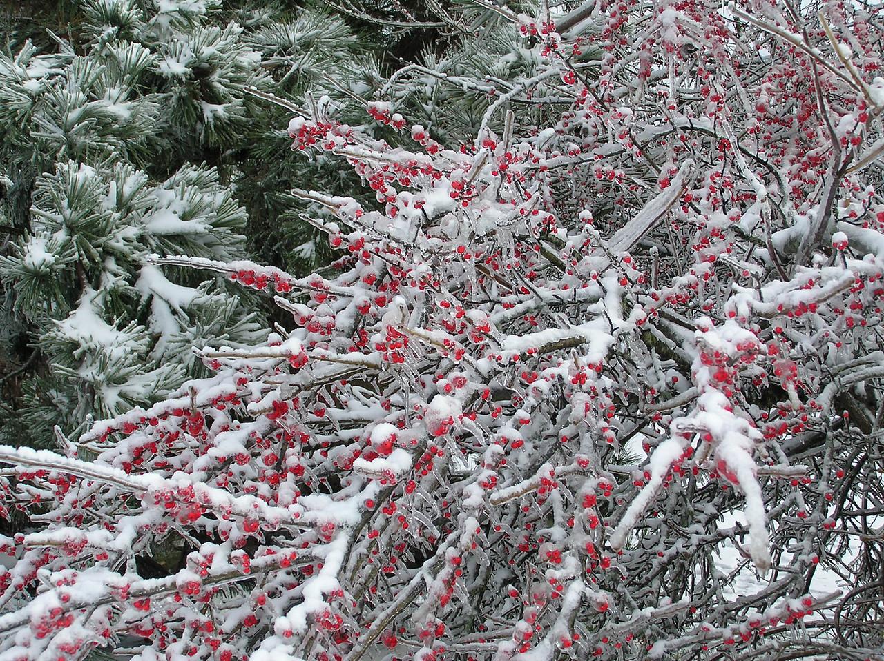 Dec 2, 2006 - Ice Storm