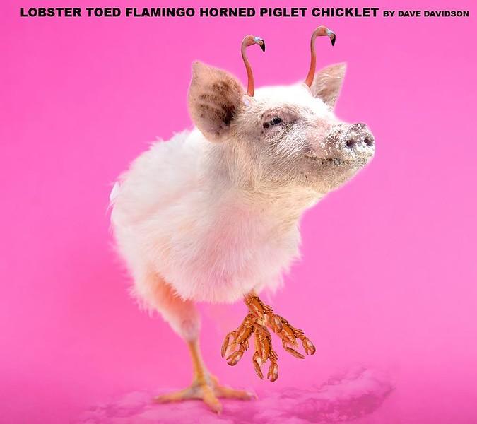 #lobster #chick #pig #photoshop #animal #flamingo #davedavidson #designer #art #artistsoninstagram #designersofinstagram #hybrid #pink #silly #comedy