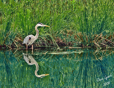 """Great Blue Heron Gone Fishing"" Short Pump, Va  Near Richmond VA  Water Mark Will Not Print On Your Order"