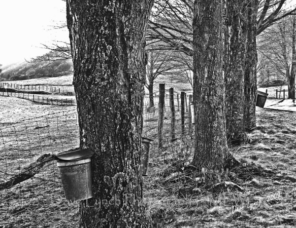 "Title: ""Virginia Maple Harvest"" Place: Mill Gap, VA Click ""Buy""  Above For Unmatted Prints    -  Watermark will not print on your order All photos available matted and framed: 5x7 -     $39 8x10 -   $49 11x14 - $69 16x20 - $149 All Photos Available In 5x7 NoteCards $3.95ea    10/$30 Email Your Order For Framed Prints And NoteCards:  ArtGalleryRiverRd@gmail.com"