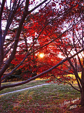 "STitle: ""December Maple Sunset""  Place: Maymont Park - Richmond, Va     You can Click ""Buy"" To Order On Line:  Prints, Framed, Canvas, and many other items.    You can email me to order  NoteCards and BookMarks   Email Your Order:  ArtGalleryRiverRd@gmail.com    All Photos Available In Beautiful 5x7 NoteCards $3.95ea 2nd Card Same Print $2.95ea  Five Cards Mix Or Match $2.95ea         All Photos available in wallet size laminated BookMarks $3.95ea Order 2 or more for $2.95ea (These make a nice favor or Mother's Day Gift)      If you have a special order or size in mind just email me and I will do my best to work with you."