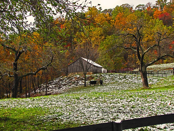 "Title: October Snow Place: Etlan, VA  We decided to take in the local scenery since it was cold and wet and snowy and we had caught over 40 trout the day before. We came upon this beautiful early snowfall at this farm near the DuCard Winery.  Click ""Buy"" For Prints - Framed - Many Other Items  Want this as a beautiful Note Card? http://www.etsy.com/listing/71810088/note-cards-5x7-choose-any-photo-or-paper"