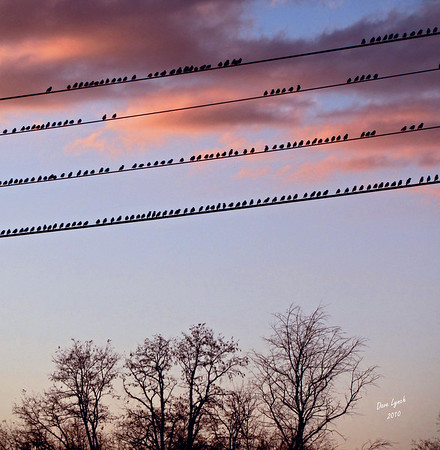 "Title: ""Birds On A Wire IV""   Place: Stuarts Draft, VA  Click ""Buy"" To order Prints, Canvas, Framed Prints, T Shirts etc. online  Watermark will not print on your order  All Photos Available In 5x7 NoteCards $3.95ea 10/$2.95ea http://www.etsy.com/listing/71810088/note-cards-5x7-choose-any-photo-or-paper?show_panel=true  Have a special size or request? Email Me and I will do my best to work with you: ArtGalleryRiverRd@gmail.com"