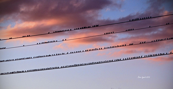 """Title: """"Birds On A Wire III""""   Place: Stuarts Draft, VA  Click """"Buy"""" To order Prints, Canvas, Framed Prints, T Shirts etc. online  Watermark will not print on your order  All Photos Available In 5x7 NoteCards $3.95ea 10/$2.95ea http://www.etsy.com/listing/71810088/note-cards-5x7-choose-any-photo-or-paper?show_panel=true  Have a special size or request? Email Me and I will do my best to work with you: ArtGalleryRiverRd@gmail.com"""