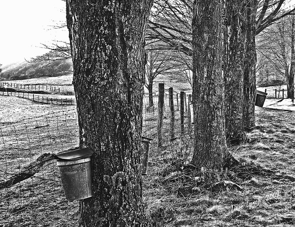 "Title: ""VA Maple Harvest"" Black and White Watermark will not print on your order"