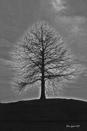 """Tree By The James""  Black and White  Watermark will not print on your order"