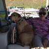 Betty Jean Yaden - 2016 (Aug) - Age 88 - Biscuit the Pit Bull shares his seat on the houseboat with Grandma Betty - Horsetooth Reservoir - Fort Collins, CO - Photo by Julie Yaden