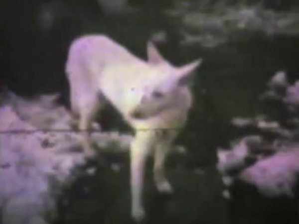 Audio Archive Clip 1980 (Nov 27) - Yaden Family - Thanksgiving Dinner at the Selah farmhouse - Part 1 of 2 - Selah, WA (15 min 53 sec)<br /> <br /> Note:  The 8mm sequences appearing in this clip were filmed throughout 1980.  The 8mm camera used did not record sound.  The audio is from Dave Yaden's cassette tape recording of the dinner.<br /> <br /> Adults at the table:<br /> <br /> Dave (age 59) & Betty (age 52) Yaden<br /> Janet (age 29) & John Owen<br /> Susan (age 29) & Elvis Tillman<br /> Dan (age 26) & Julie (age 26) Yaden<br /> Ron & Pauli (age 22) Young<br /> Mark Yaden (age 24)<br /> <br /> Children present:<br /> <br /> Jennifer Owen (age 2)<br /> Danny Yaden (age 2)<br /> Nicole Owen (age 11 mos)