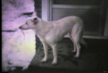 Video Archive Clip 1980 (1) - Yaden Family - Cats, Dogs, Cows & Danny (age 1 yr 9 mos) at the Selah Farmhouse - Selah, WA - 8mm Series (2 min 54 sec)