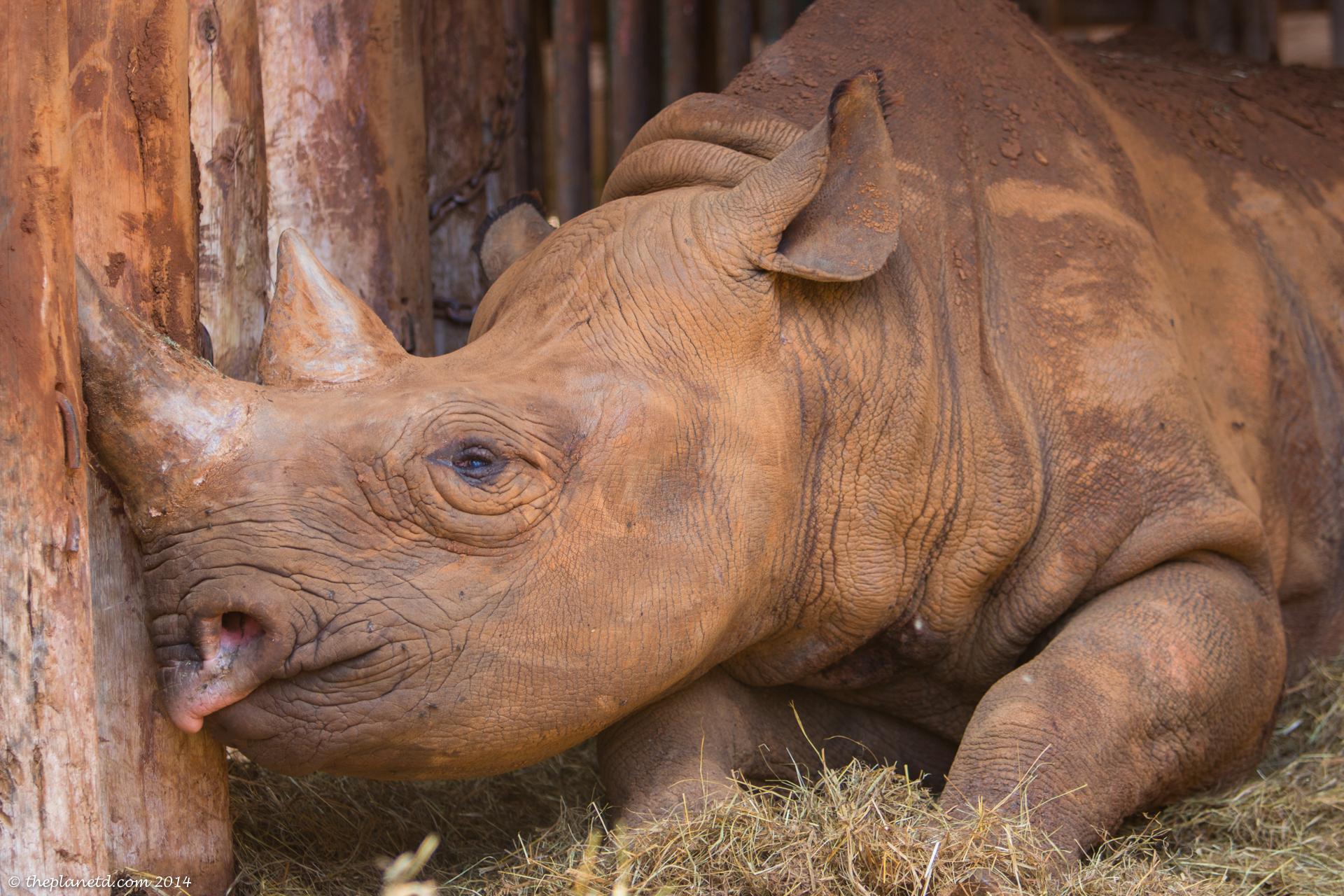 rhinoserous