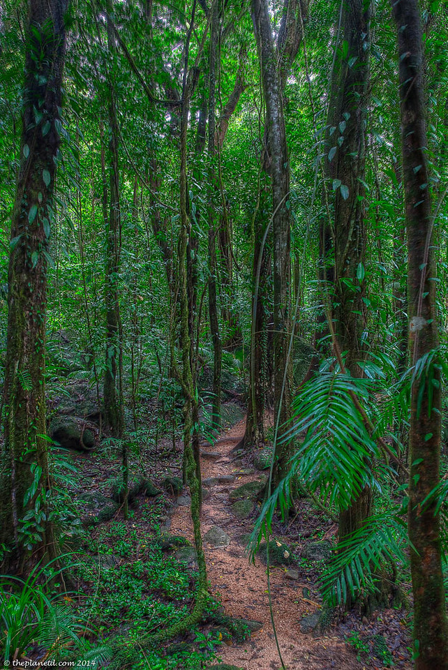 The Daintree Forest.