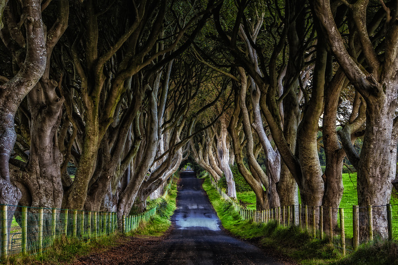 Dark Hedges, Northern Ireland | The It's Travel O'Clock GREAT Britain Travel Bucket List