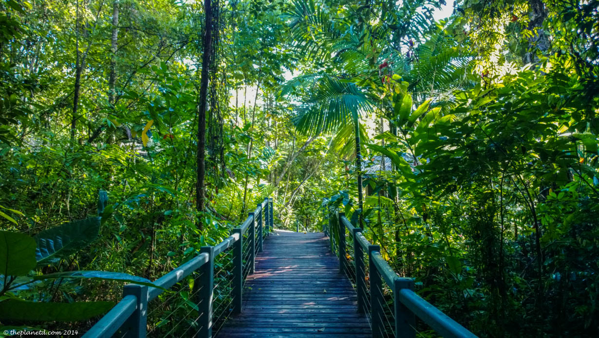 Daintree Rainforest Romantic getaway