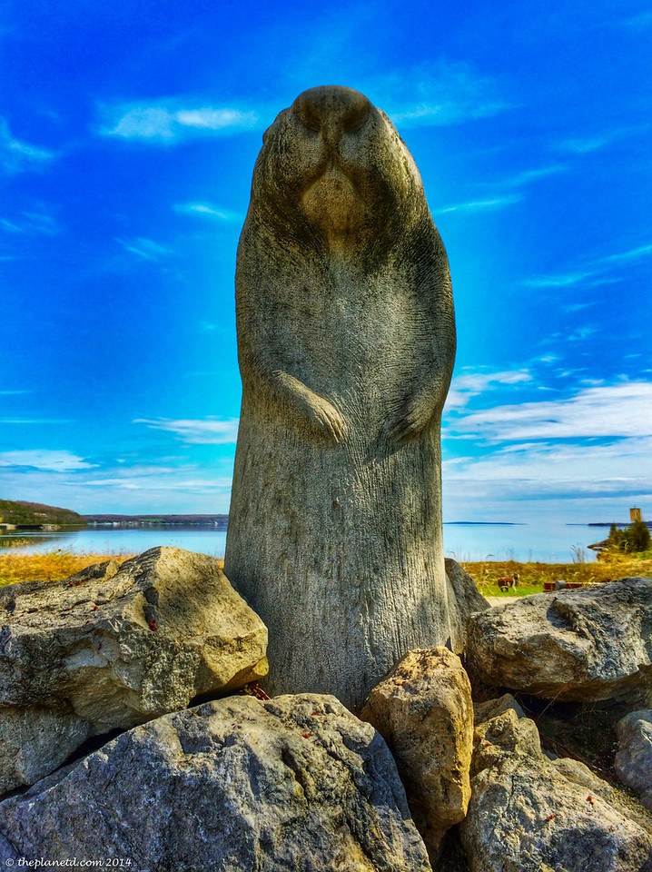 The famous Wiarton Willie.