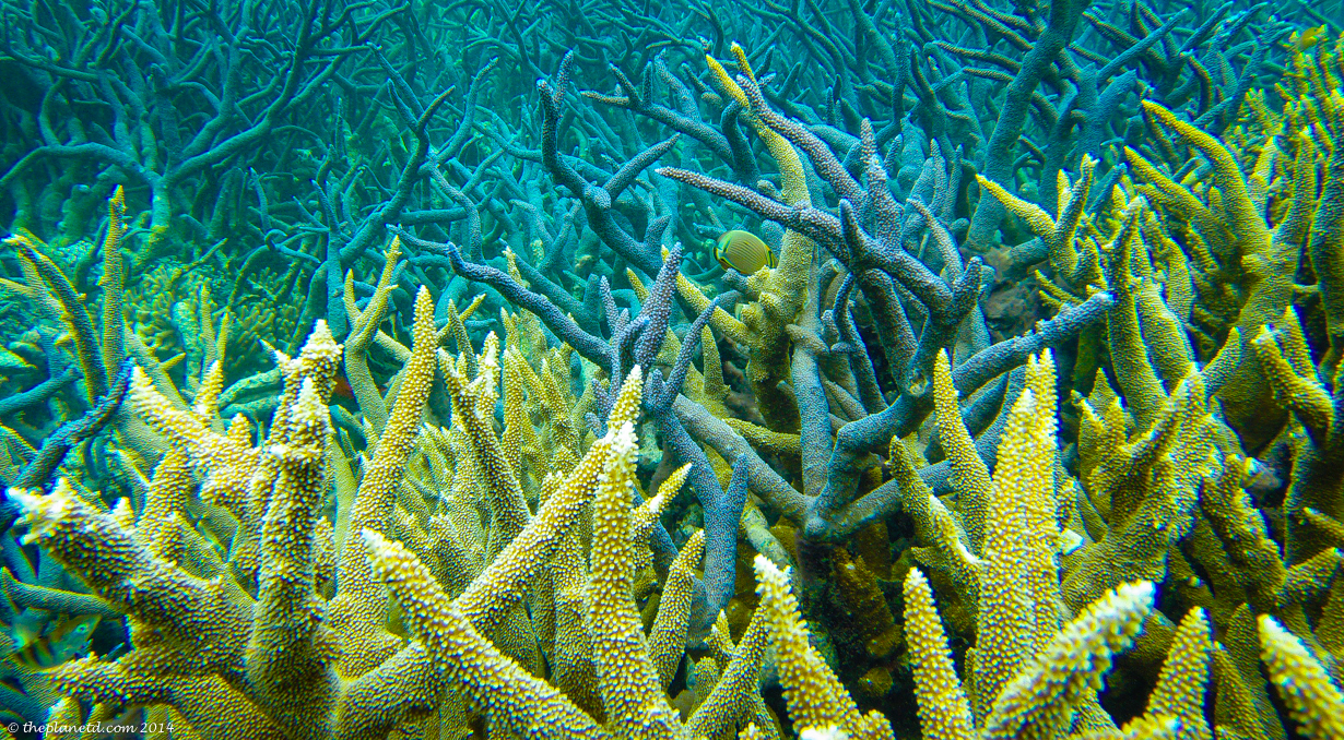 personal essay for education degrees education elementary resume great barrier reef kidcyber some of the bleaching of reefs in the northern section has been