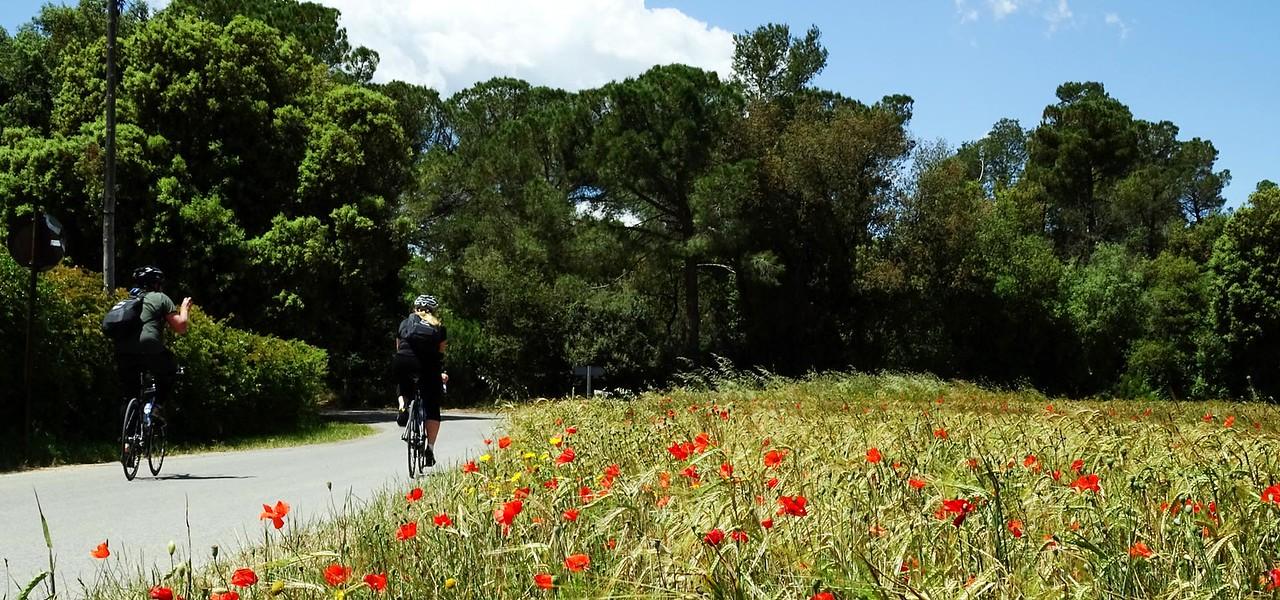 cyclists by a poppy field
