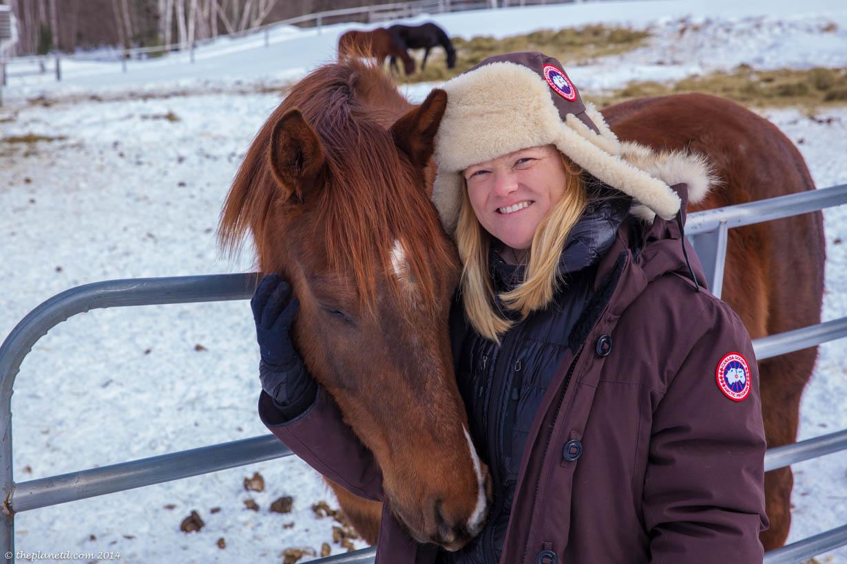 Horse Sleigh ride in Muskoka