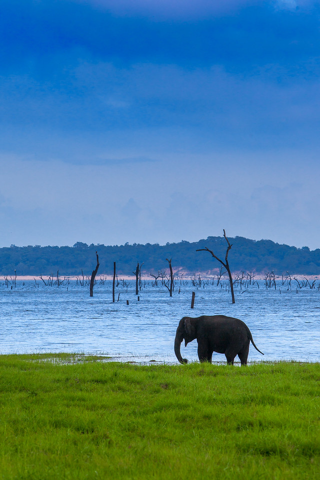 An Elephant Safari in Sri Lanka