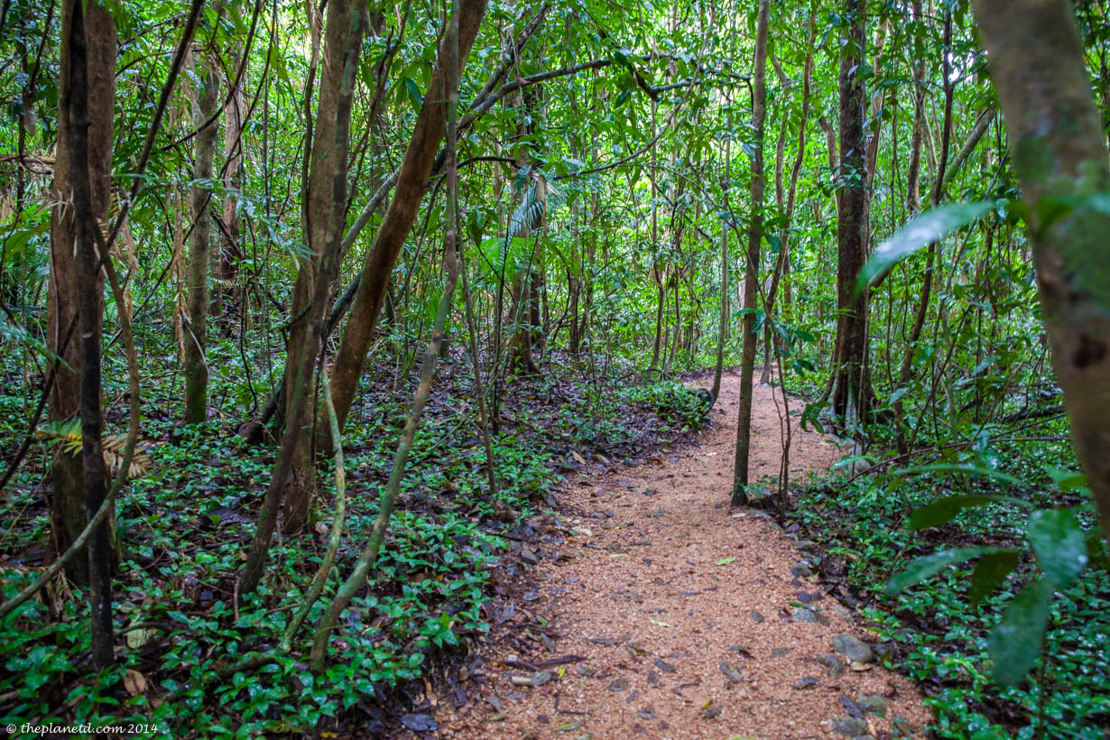 The Beautiful Daintree Forest in Queensland