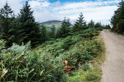 The First Day - Glenmalure to Laragh