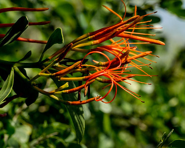 flower, Crooked Tree wildlife sanctuary, Bird's Eye View Lodge