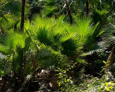 Foliage on nature trail,  Bird's Eye View Lodge