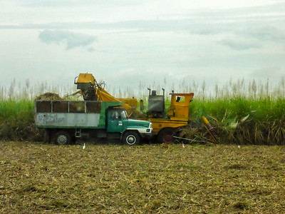 sugar cane harvest on the way to Camaguey.JPG