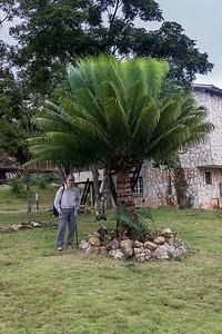 cycad Villa Pinares de Mayari.ARW