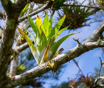 bromeliad.ARW