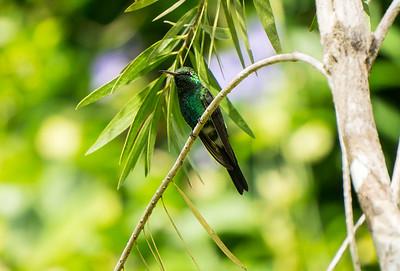 Cuban Emerald.ARW