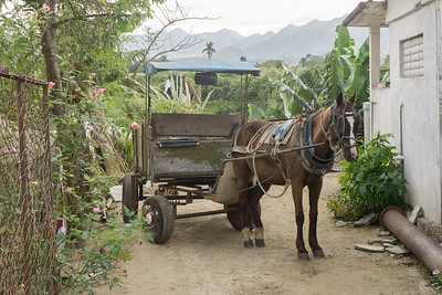 Horse and cart waiting.ARW
