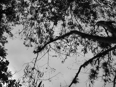 Bromoliads and sky