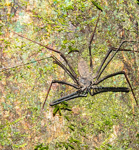 Whip Scorpion, near Sacha Lodge