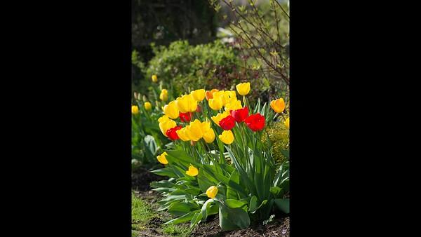 A spring garden review