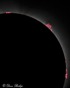 Ruby Prominences