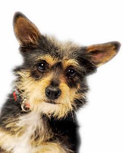 Scruffy Rescue Dog
