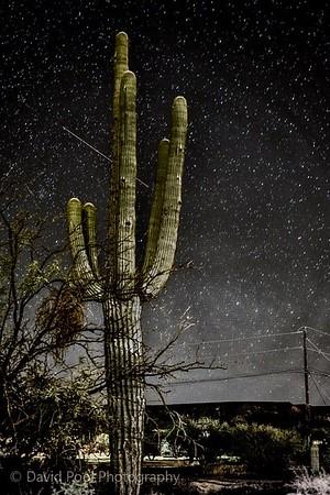 Perseid Meteor pic