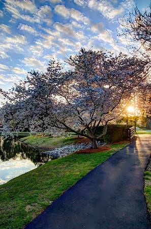 WestPark Pond, Cary, NC